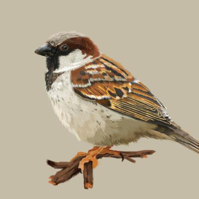 Paneles didácticos de aves